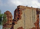 Birds on a wall