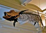 Dinosaur fish skeleton