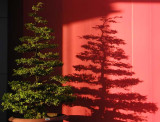 dawn tree.jpg