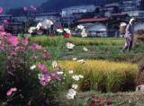 otaki flowers rice.jpg