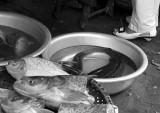 fish and foot.jpg