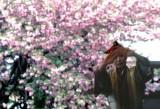 pink blossom greeting.jpg