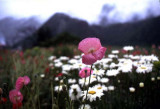 in full bloom.jpg
