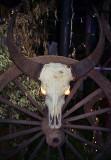water buffalo skull.jpg