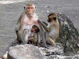 prachuap monkeys.jpg