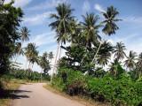 tropical road.jpg