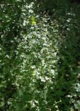 plateau vegetation.jpg