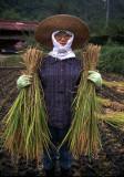 agematsu harvest.jpg