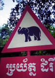 elephant crossing.jpg