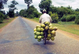 coconut bike.jpg