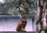 cat on temple wall.jpg