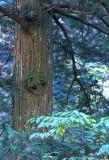atera tree.jpg