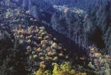 atera trees.jpg