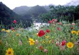 flowers and rain.jpg