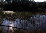 walabi pond.jpg