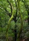 green trunks.jpg