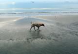 beach patrol.jpg