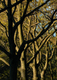 trunks and branches.jpg