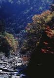 river foliage.jpg