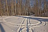 Snowmobile tracks on lawn