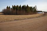 Grove of trees at former base in Moosonee