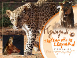 Kgalagadi The year of the Leopard