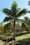 Visite du conservatoire-jardin botanique national des Mascarins