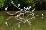 Dans le parc ornithologique du Teich situé au fond du Bassin d'Arcachon