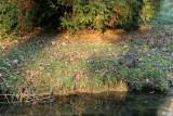 Balade hivernale dans le parc du château de Grouchy en décembre 2008