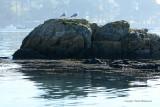 Sur le golfe du Morbihan en semi-rigide - MK3_9391 DxO Pbase.jpg
