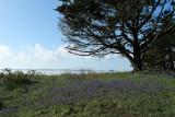 Sur le golfe du Morbihan en semi-rigide - MK3_9444 DxO Pbase.jpg