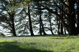 Sur le golfe du Morbihan en semi-rigide - MK3_9464 DxO Pbase.jpg