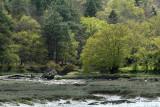 Le Bono et la rivière du Bono - MK3_9813 DxO Pbase.jpg