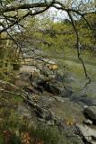 Le Bono et la rivière du Bono - MK3_9831 DxO Pbase.jpg