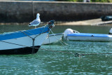 Sur le golfe du Morbihan en semi-rigide - MK3_9635 DxO Pbase.jpg