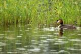 Photos prises dans l'affût de l'étang de Beaumont près de Neung-sur-Beuvron