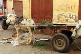 3495 Vacances en Egypte - MK3_2424_DxO WEB.jpg