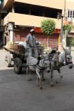 3518 Vacances en Egypte - MK3_2449_DxO WEB.jpg