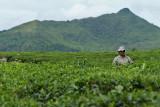 2 weeks on Mauritius island in march 2010 - 1771MK3_0967_DxO WEB.jpg