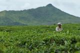 2 weeks on Mauritius island in march 2010 - 1774MK3_0970_DxO WEB.jpg