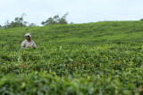 2 weeks on Mauritius island in march 2010 - 1776MK3_0972_DxO WEB.jpg