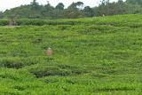 2 weeks on Mauritius island in march 2010 - 1796MK3_0992_DxO WEB.jpg