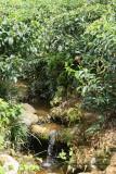 2 weeks on Mauritius island in march 2010 - 1798MK3_0995_DxO WEB.jpg