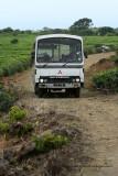 2 weeks on Mauritius island in march 2010 - 1803MK3_1000_DxO WEB.jpg