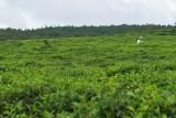 2 weeks on Mauritius island in march 2010 - 1822MK3_1019_DxO WEB.jpg