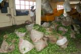 2 weeks on Mauritius island in march 2010 - 1850MK3_1049_DxO WEB.jpg