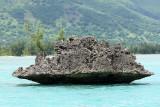 2 weeks on Mauritius island in march 2010 - 2499MK3_1507_DxO WEB.jpg