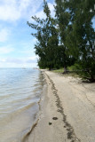 2 weeks on Mauritius island in march 2010 - 2553MK3_1560_DxO WEB.jpg
