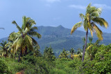 2 weeks on Mauritius island in march 2010 - 2614MK3_1622_DxO WEB.jpg