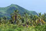 2 weeks on Mauritius island in march 2010 - 2615MK3_1623_DxO WEB.jpg